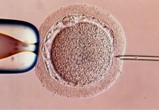 IVF process